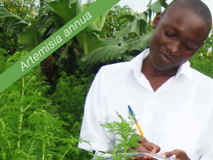 Éducation et Santé : Jardins et cantines scolaires