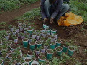 Promotion d'une éducation de qualité et améliorer la santé dans les écoles par les jardins et cantines scolaires équipées de fours à faible consommation énergétique