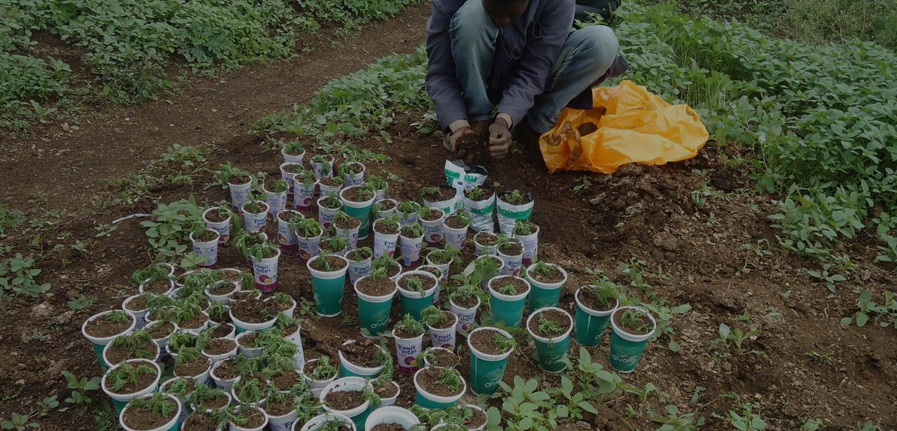 63. Promotion d'une éducation de qualité et améliorer la santé dans les écoles par les jardins et cantines scolaires équipées de fours à faible consommation énergétique