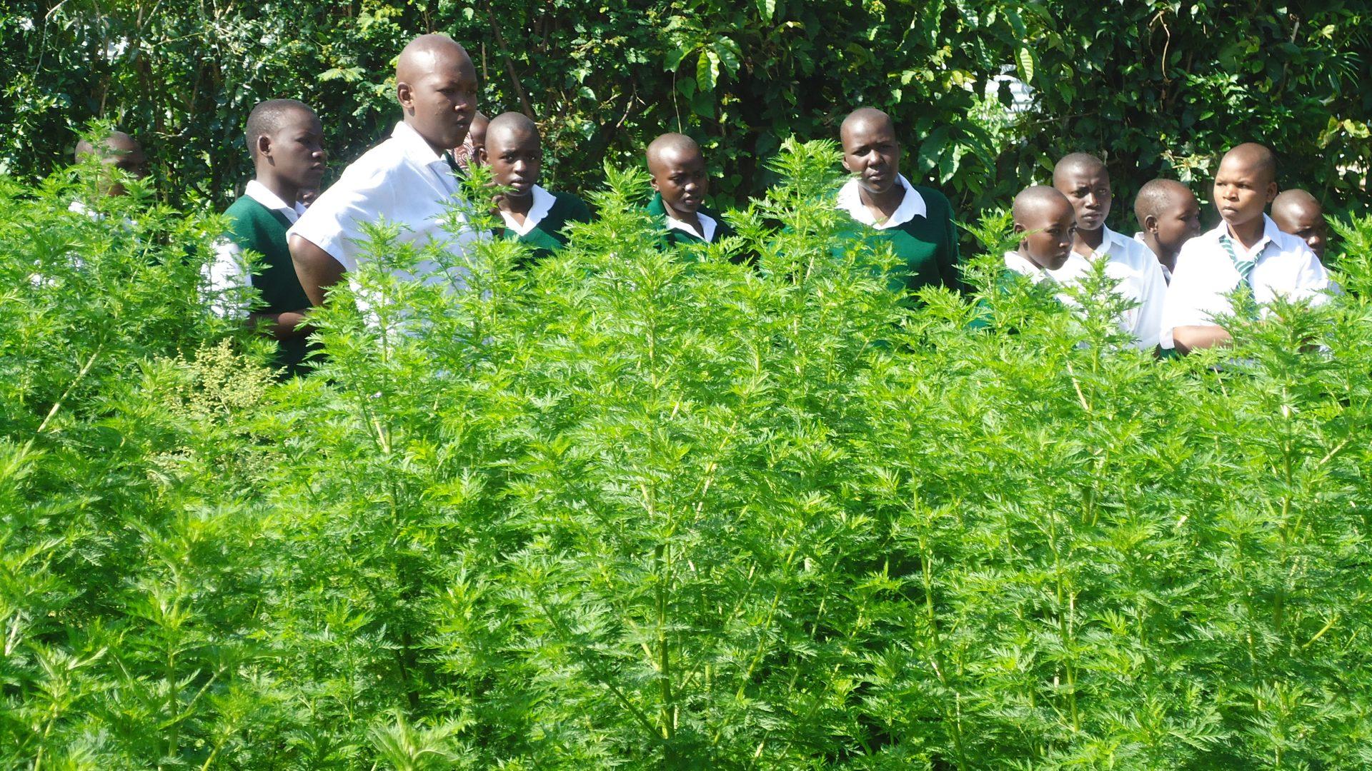 64. Promotion d'une éducation de qualité et une meilleure santé dans des écoles par la création de jardins scolaire et cantines scolaires