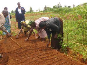 70. Projet Adev : promouvoir une éducation environnementale de qualité et amélioration de la santé scolaire en Guinée forestière