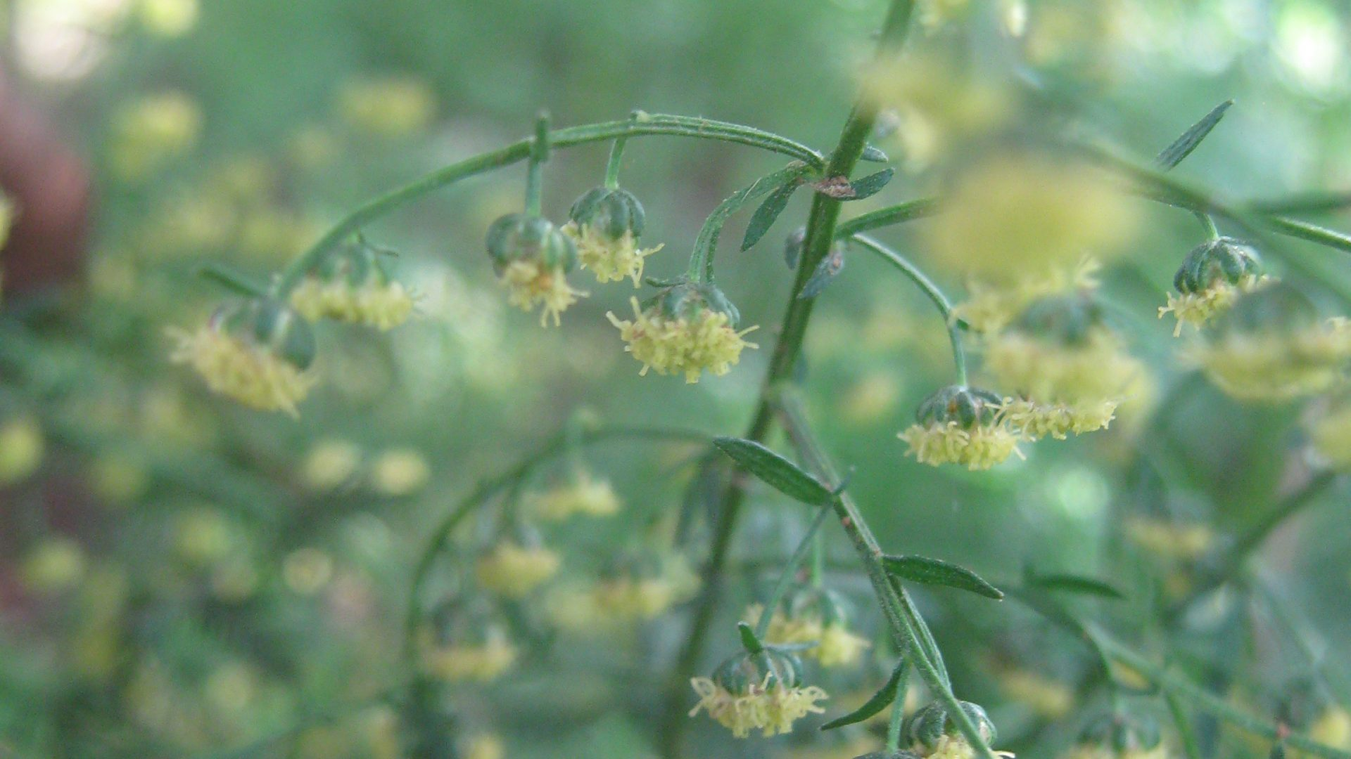 49. Improving the quality of education with Artemisia annua in schools